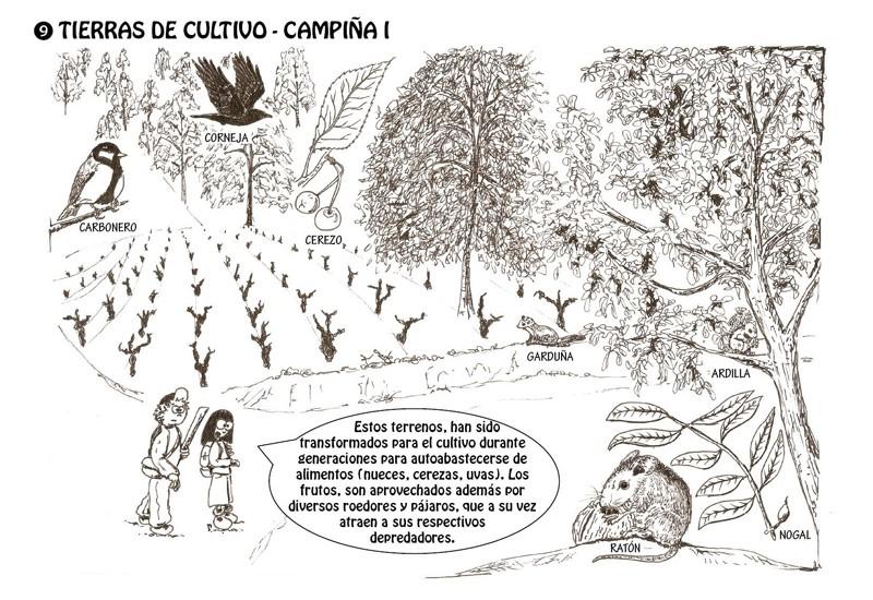 Tierras de cultivo - Campiña I