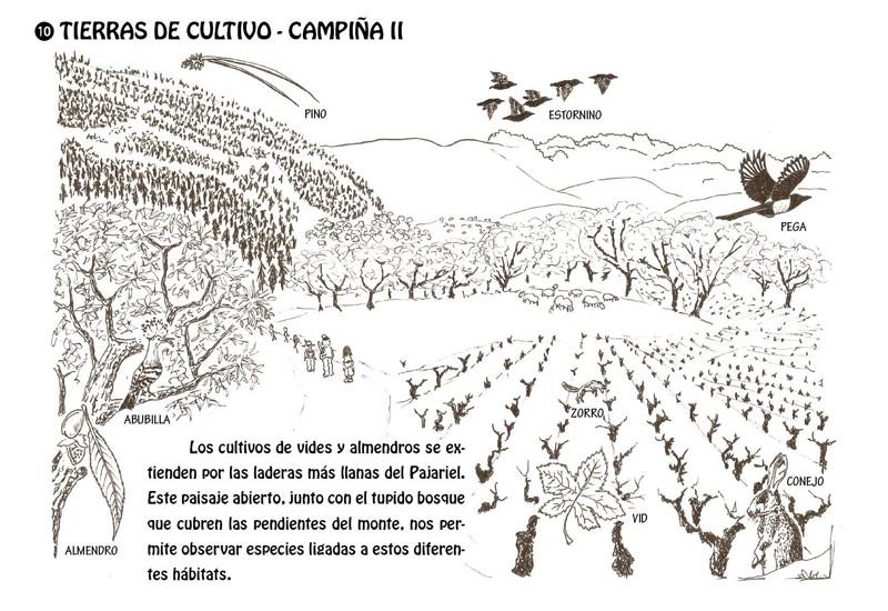 Tierras de cultivo - Campiña II